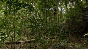 Ученые нашли постройки майя